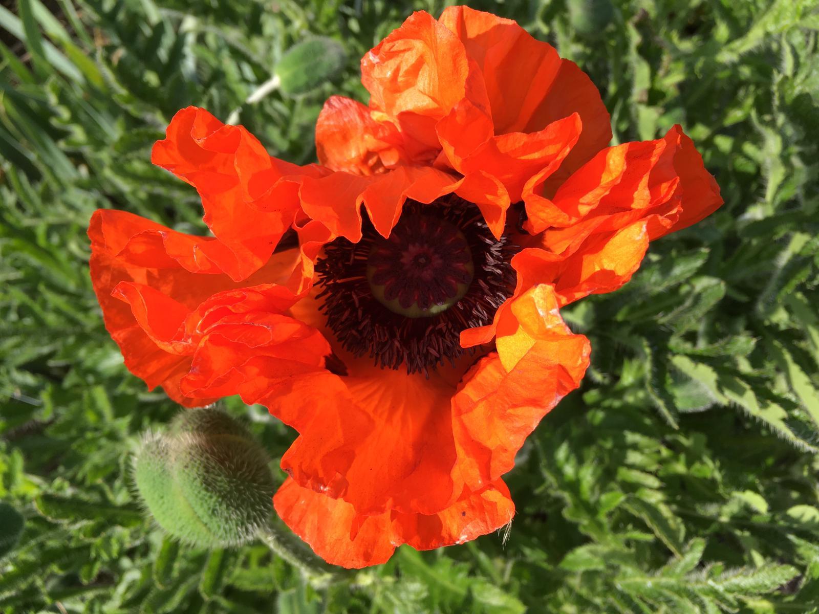 frankrijk bloem