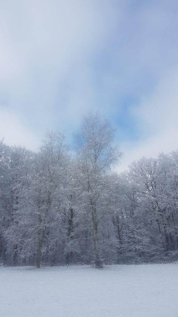 le brocard sneeuw bomen blauwe lucht
