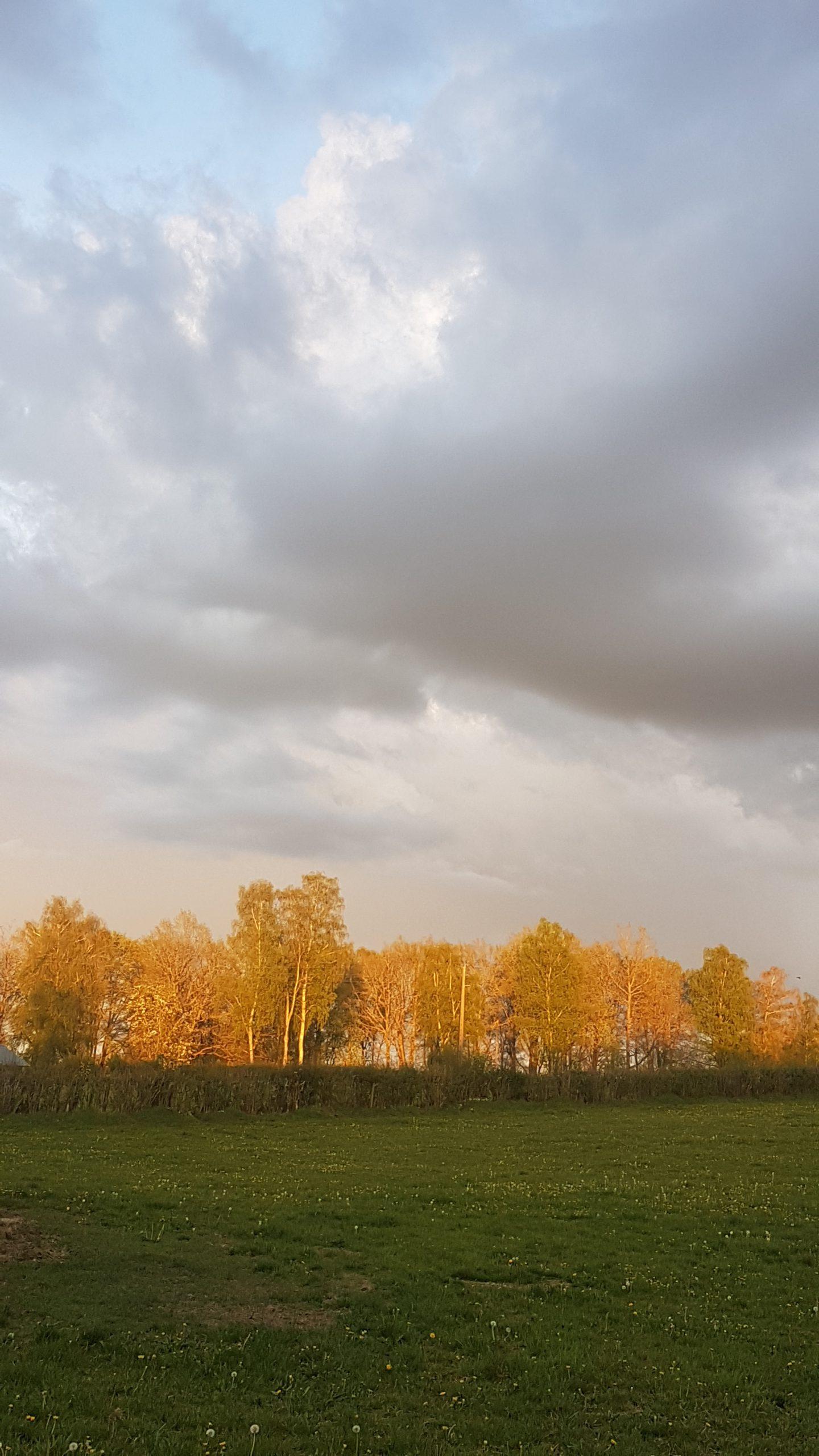 le brocard zon op bomen